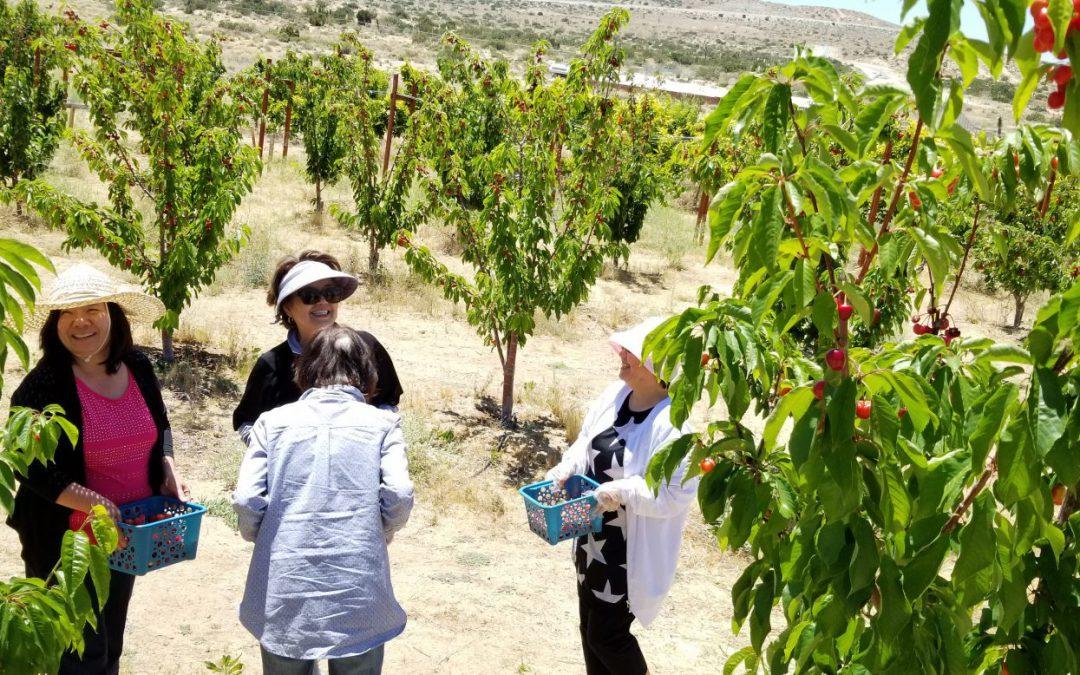 가나안 농장 과수원 방문